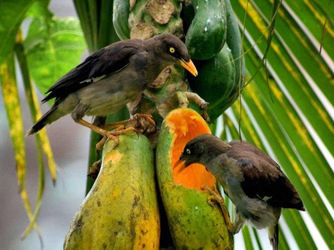 Go birding to honour the Bird Man of India