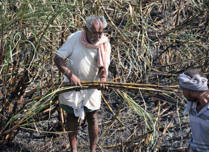 Mobile app to gather data on crop losses