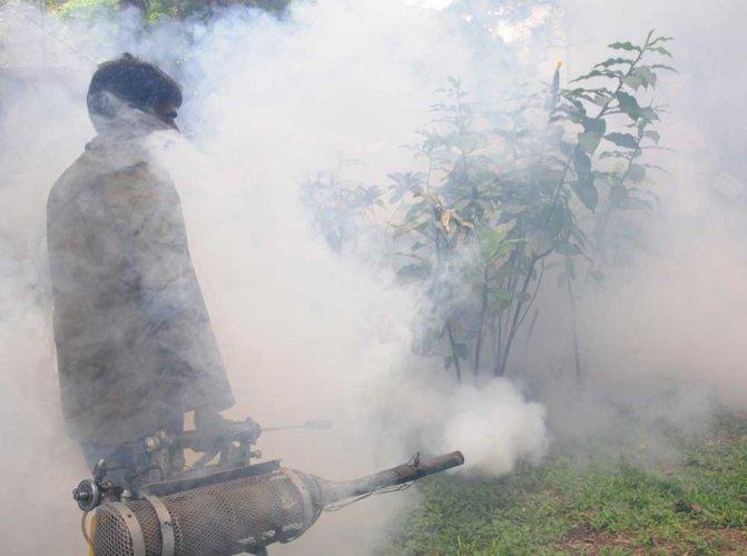 Karnataka accounts for more than half of nation's chikungunya cases