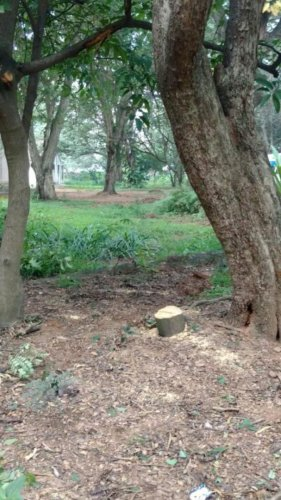 Sandalwood trees looted from Nobel laureate C V Raman's house
