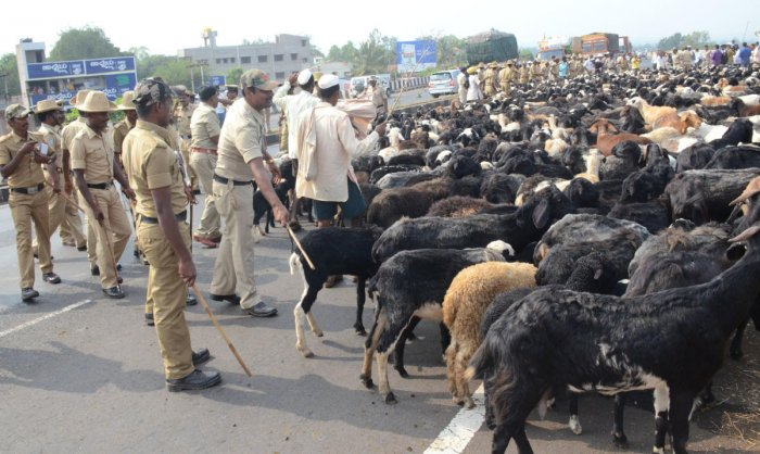 Police stop Kurubas trying to herd sheep flock into Soudha