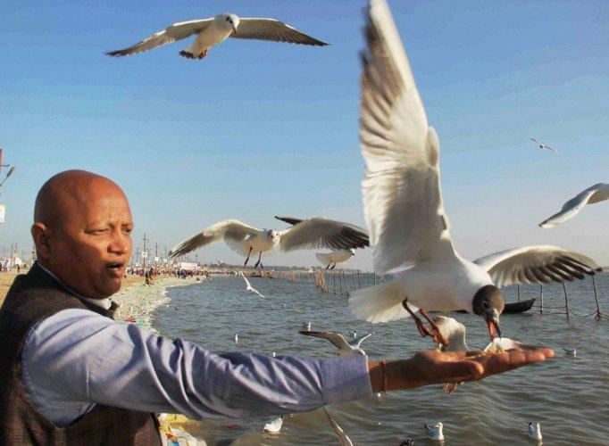 Not just people, smog affecting flight of migratory birds