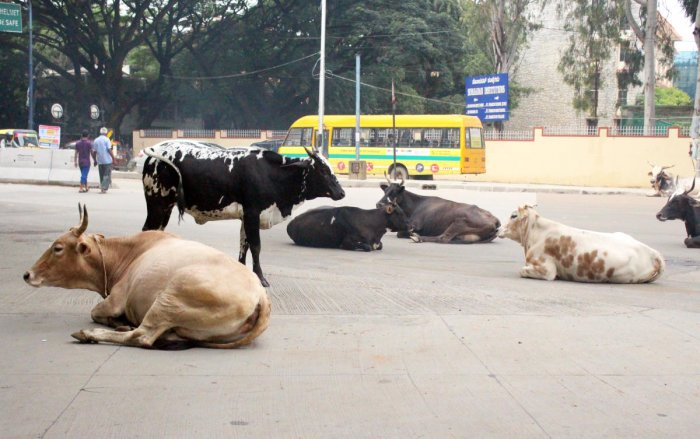 Human form of 'mad cow' disease detectable in skin: study