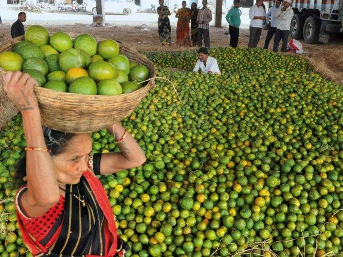 Nagpur to host Orange fest