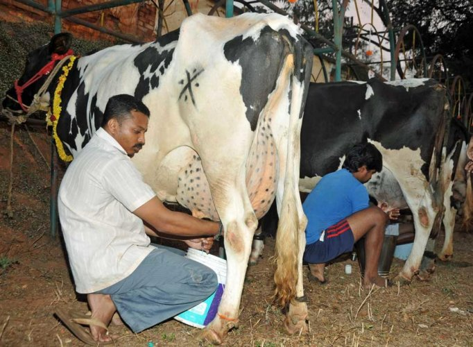 Milk output rises 19%; dairy farmers' income up 24% in 2014-17