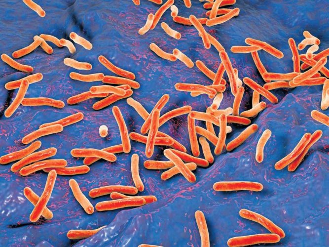 'Effective tuberculosis vaccine in the offing'