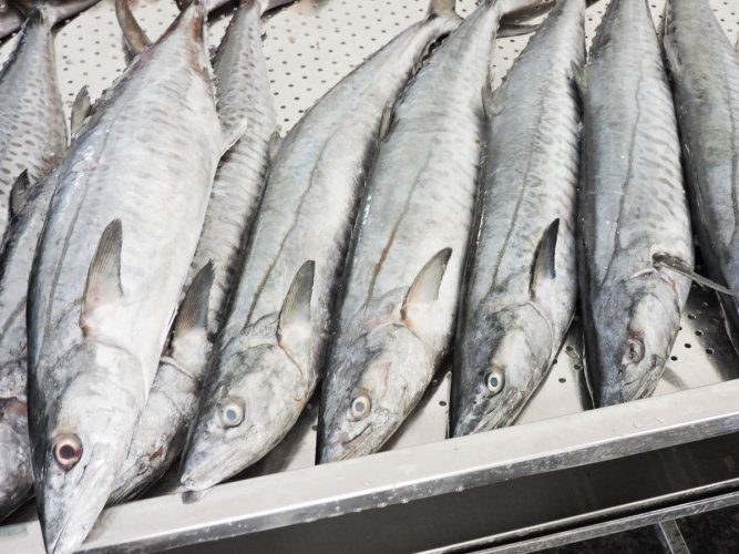 Centre withdraws rules to regulate fish, aquarium markets