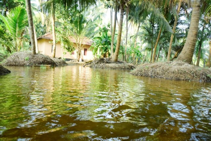 Salt water intrudes into farm land