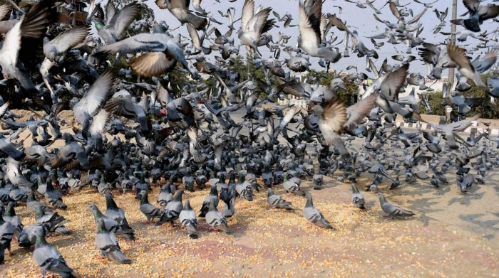 Pigeons can discriminate both space, time: study