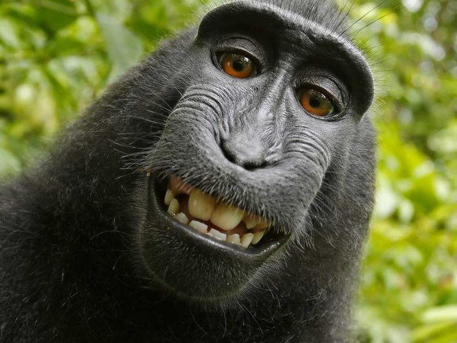 Indonesia's selfie-snapping monkey is PETA 'Person of the Year'