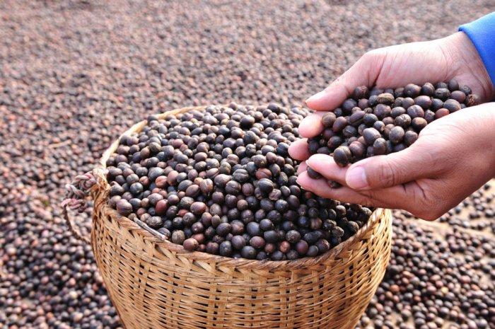 SLN Coffee launches Levista