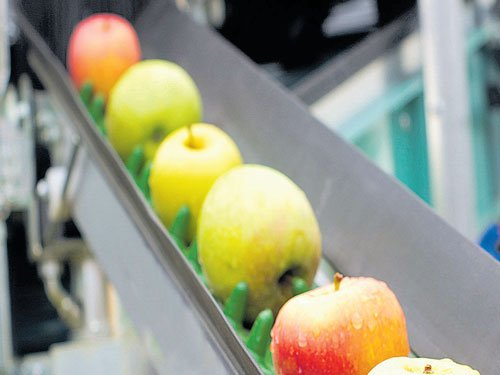 Israeli soldier suspended for stealing Palestinian's apples