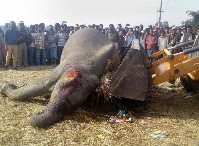 Five elephants mowed down by train in Assam