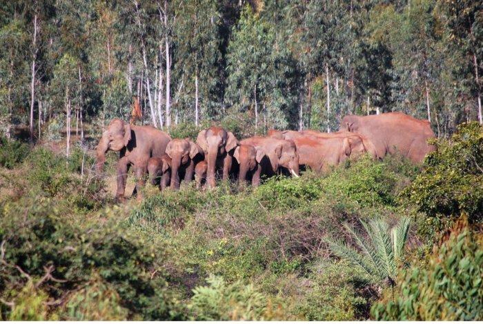 The need to restore elephant corridors