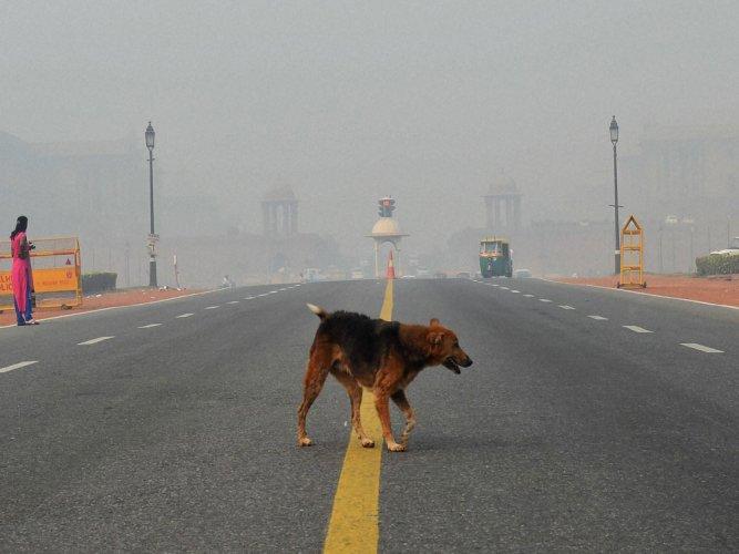 Now, dog lands in police custody in UP