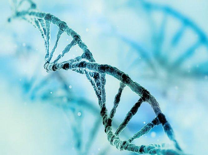 'Rare gene mutation that lowers sensitivity to pain found'