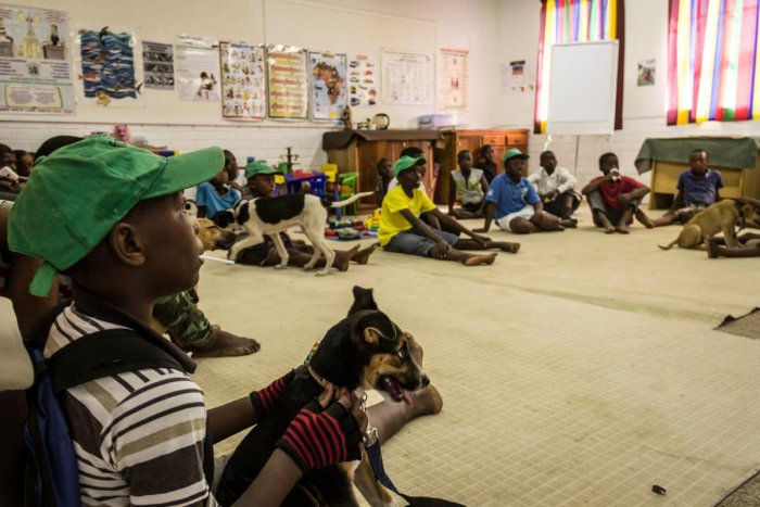 Dogs  shielding S Africa's youth from violence