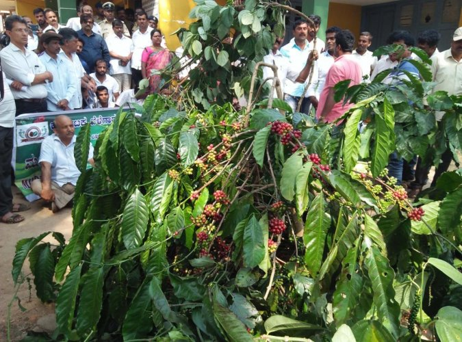 15-acre coffee plantation cleared in Basani