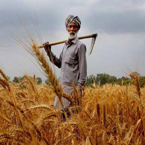 In Punjab, loan waiver hasn't stopped farmers' suicides