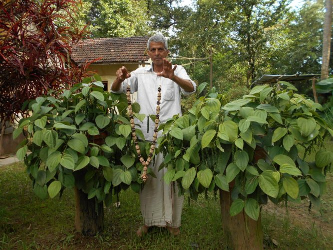 Fascinating black pepper garlands