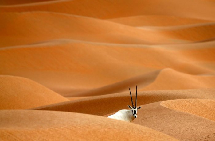 Oman opens oryx reserve to ecotourists