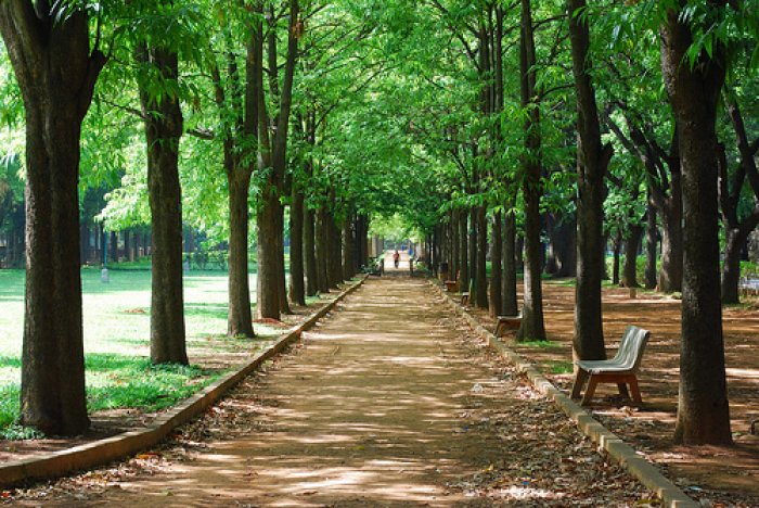 Cubbon Park walkers demand safety on New Years' eve