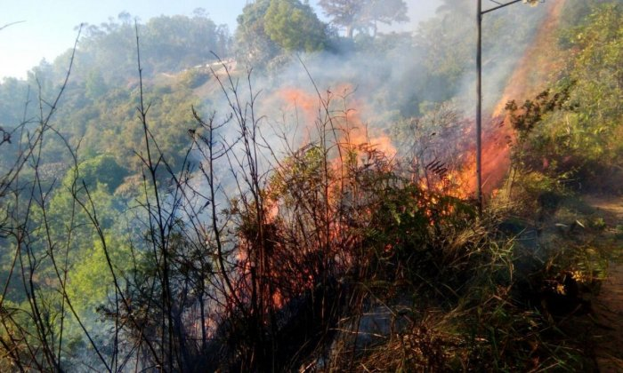 Fire near Raja Seat guts forest