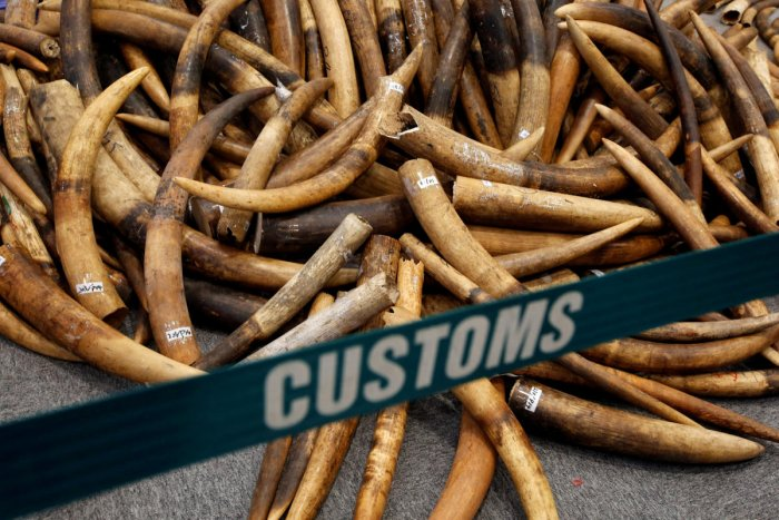 Chinese ban on ivory sales goes into effect