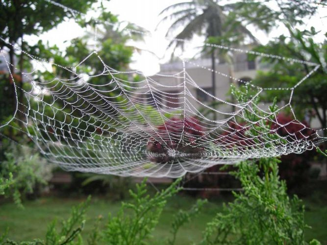 'Spider web inspired implant may control type 1 diabetes'