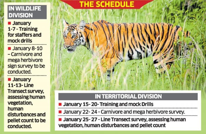 Tiger Census from Jan 8, safari to be closed for a week