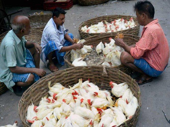 Bird flu has no major dent in sales of chicken, eggs