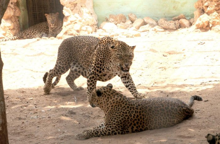 Wild animals that bear the brunt of conflicts