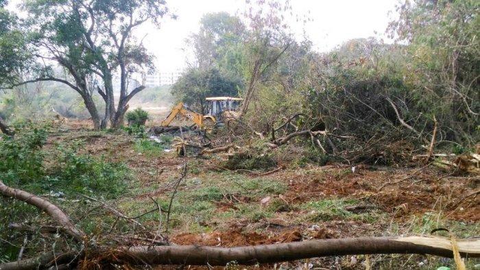 Over 70 trees felled to lay road near Pattandur Agrahara lake