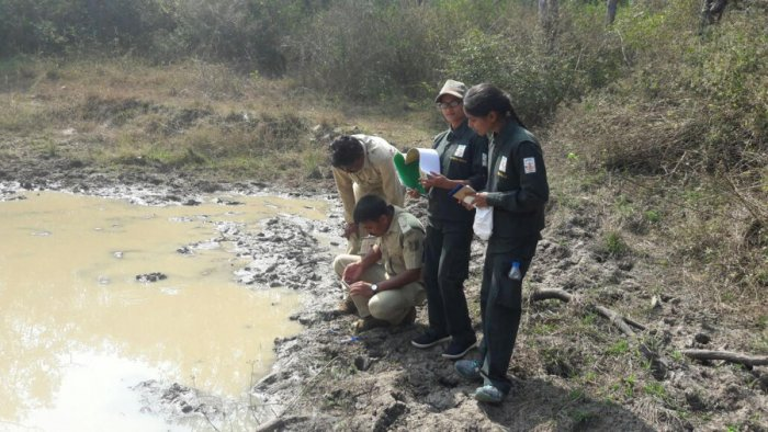 Enumerators have a field day, 12 tigers sighted on Day 3