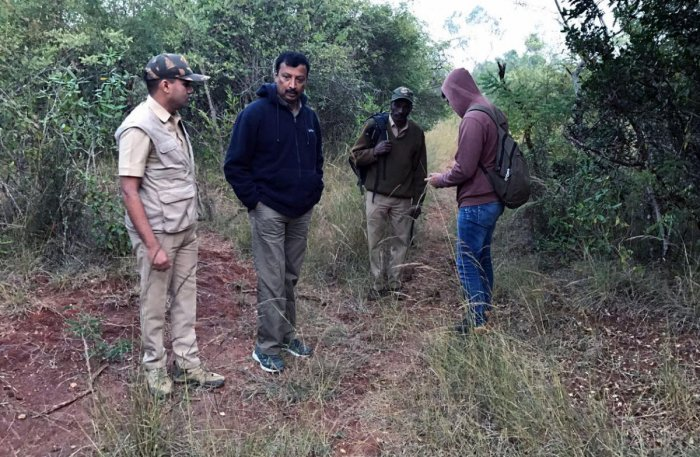 Enumerators sight 2 tigers, 3 cubs on Day 3