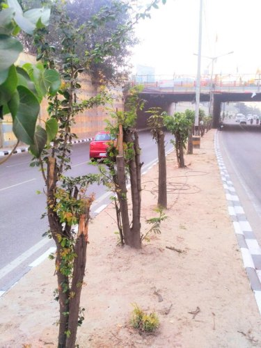 Chopped trees bloom with life after treatment