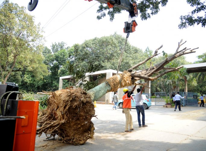 Concerns over method to translocate trees on Bannerghatta Road