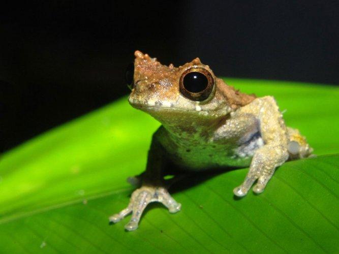 'Clockwork Orange' frog species named after Stanley Kubrick