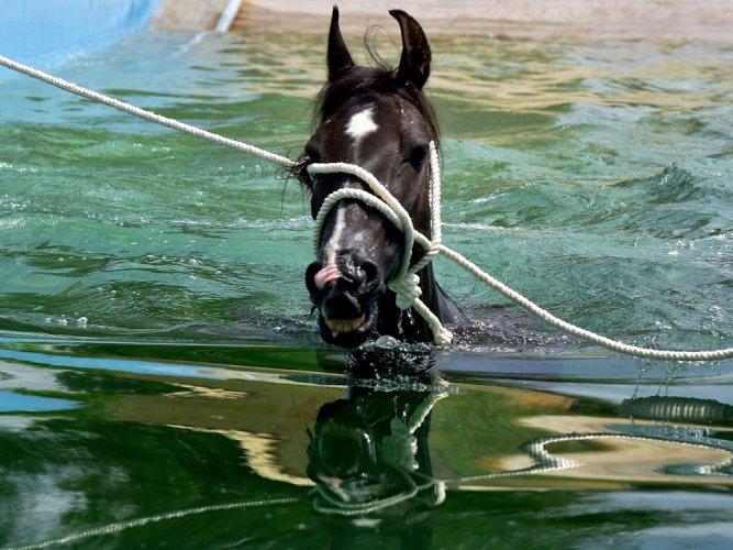 Horse disease strikes Delhi; Govt imposes restriction