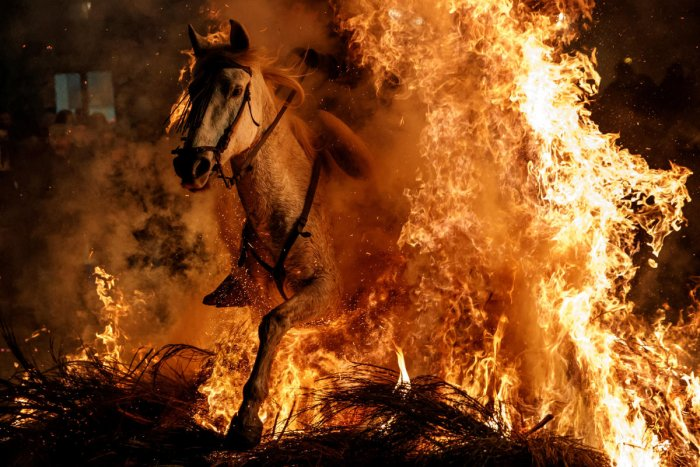 Spanish village 'purifies' horses with fire ritual