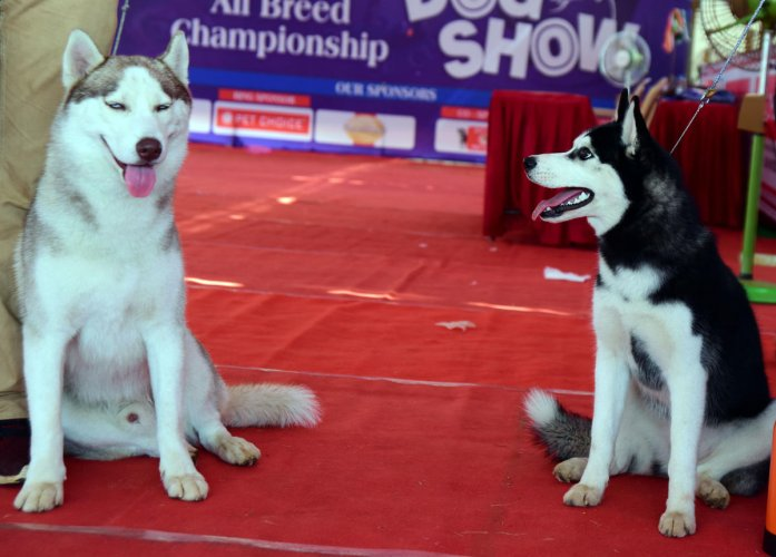 Different breeds of dogs steal the show