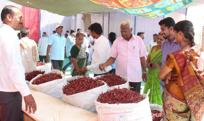 Less sales at Chilli Mela this time