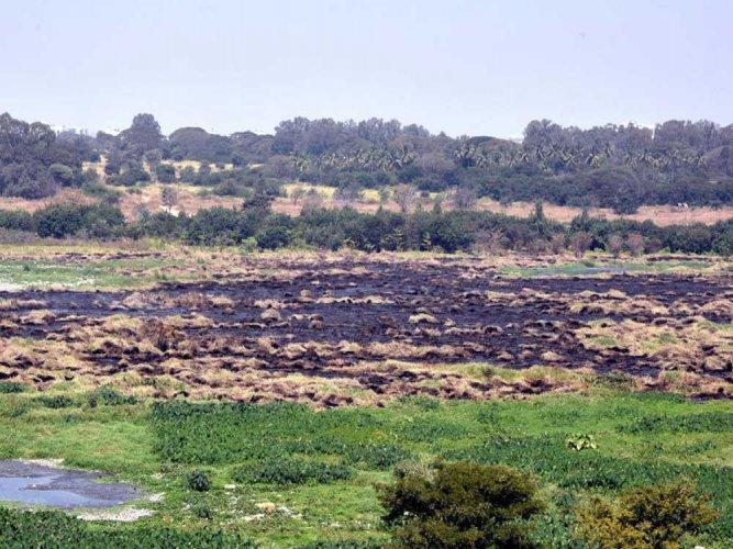NGT rebukes govt for 'doing nothing' to avert fire in Bellandur Lake
