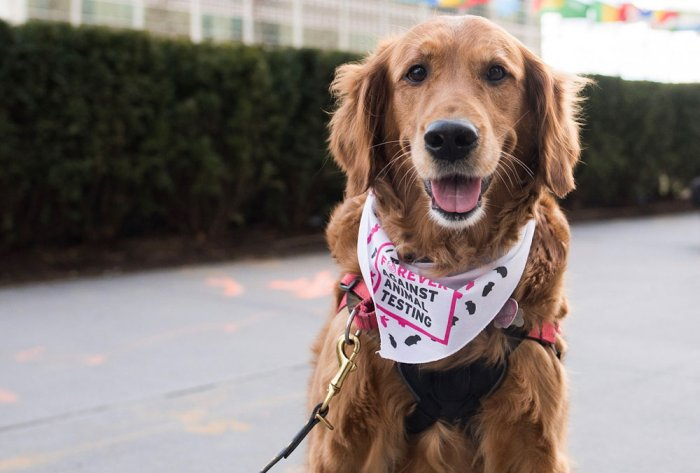 Not humans, but dogs protest for animal rights at UN HQ