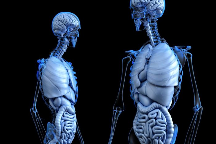 Our bones might help keep our weight in check