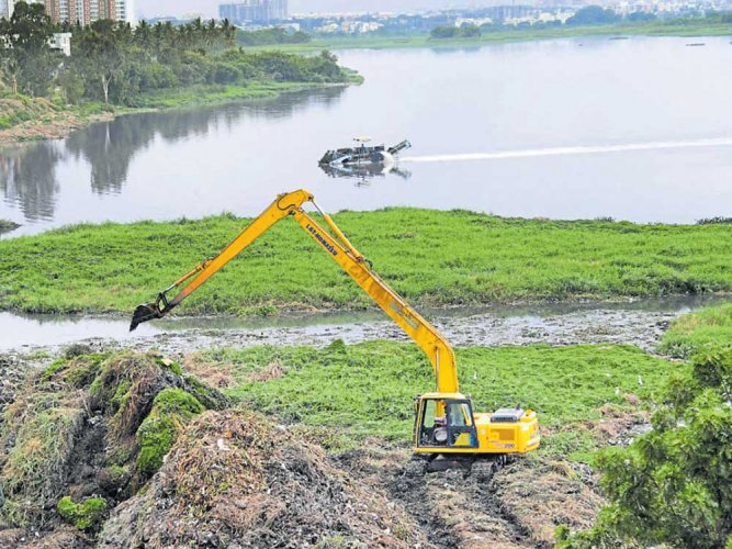 NGT tells state to revive Bellandur, other lakes