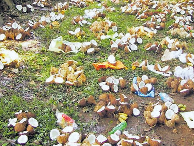 Coconuts prices hit consumers hard