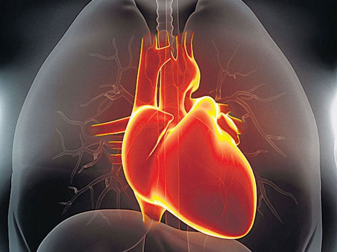 Crash diets may harm heart's ability to pump blood: study