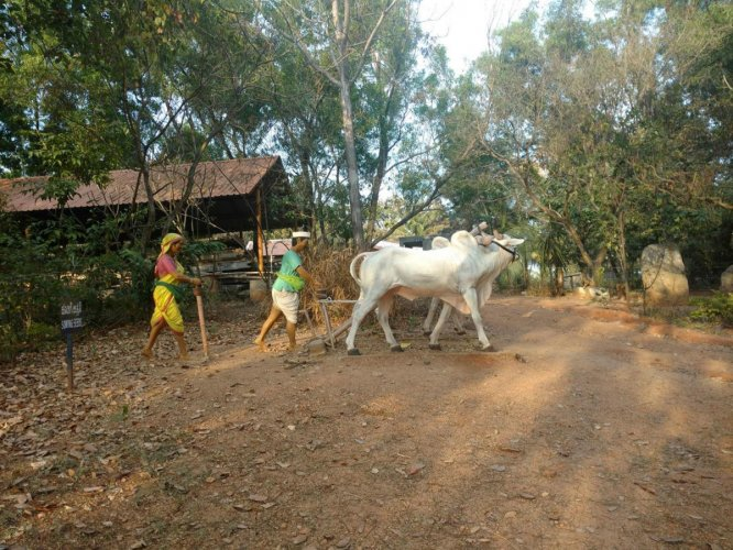 A visit to the rural world