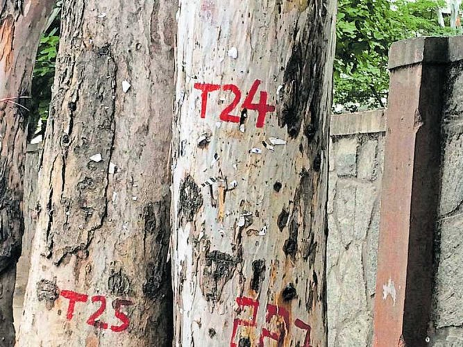 People ask MLAs to vote against tree cutting act